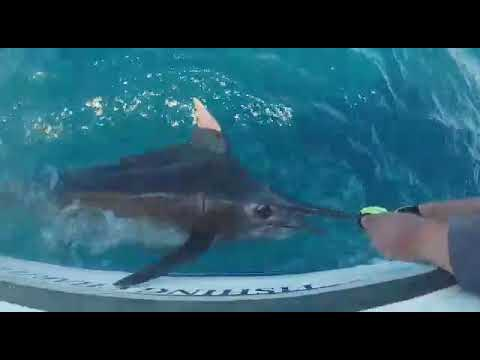 Marlin Fishing With Deep Sea Fishing Charters Cape Town