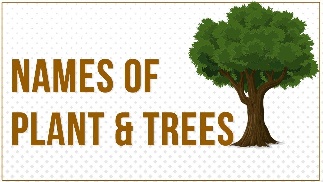 Trees Name, Plants Name in English and Hindi for Children