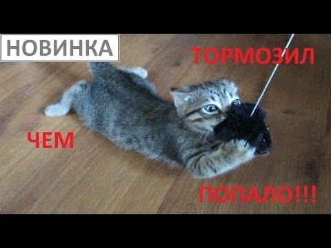 Смешной кот очень смотреть онлайн