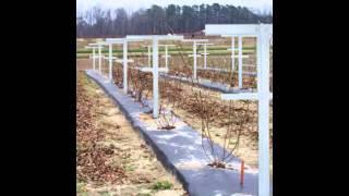 Raspberry Stake,raspberry Trellis,flower Trellis,vineyard Trellis,kiwifruit