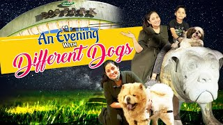 An evening at Dog Park with My Pet Puppy| Playing with Different Dog Breeds| Vlog |Sushma Kiron