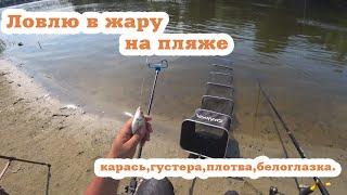 Густера белоглазка сопа Карась Ловлю рыбу на городском пляжу Жена на рыбалке Ловля фидером на реке
