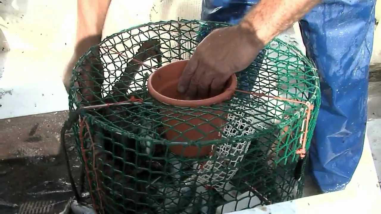 Pescando pulpos en el levante almeriense sabor a mar for Como hacer una laguna