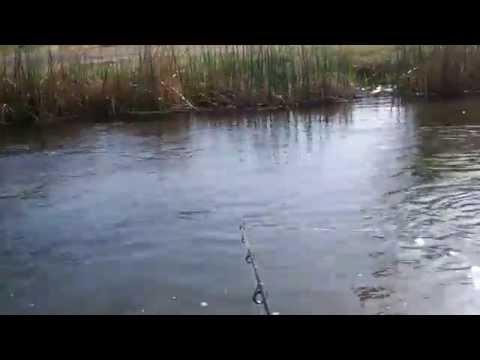 BISHOP CREEK,CA TROUT FISHING