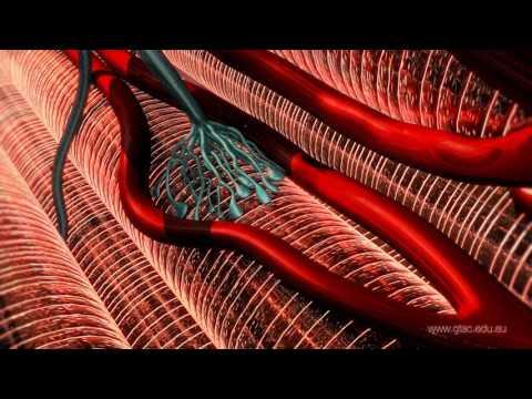 Clostridium tetani and Tetanus