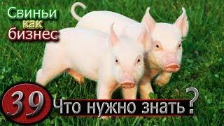 видео: ПРЕЖДЕ ЧЕМ ЗАВЕСТИ ПОРОСЕНКА...