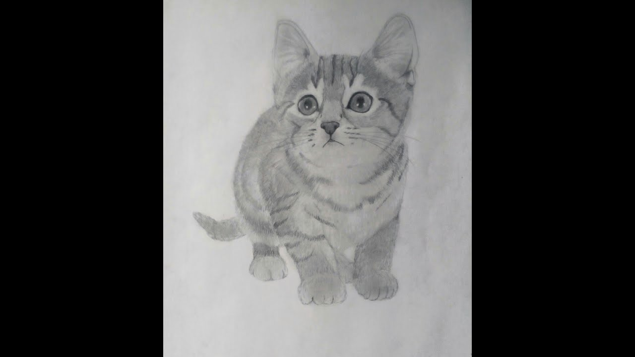 Comment dessiner un chaton r aliste youtube - Un chat a colorier ...