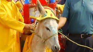 Download Video Keledai Dihormati Dalam Satu Hari Festival MP3 3GP MP4