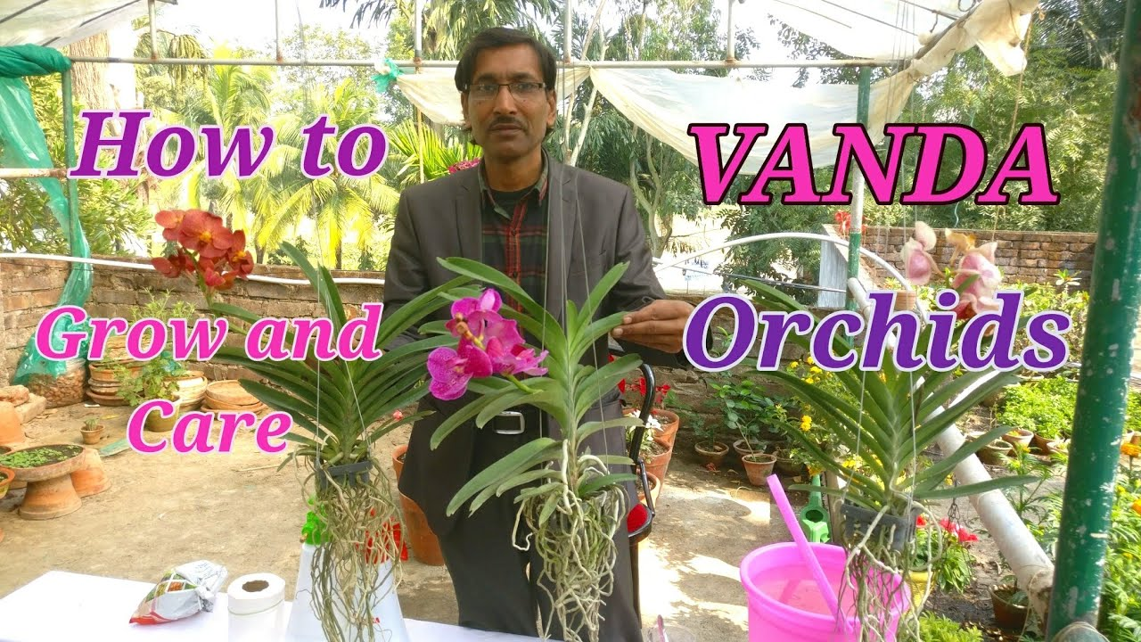 How To Grow And Care Vanda Orchids Easily At Your Home Youtube
