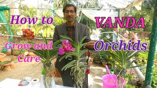 How to grow and care VANDA Orchids Easily at your home.
