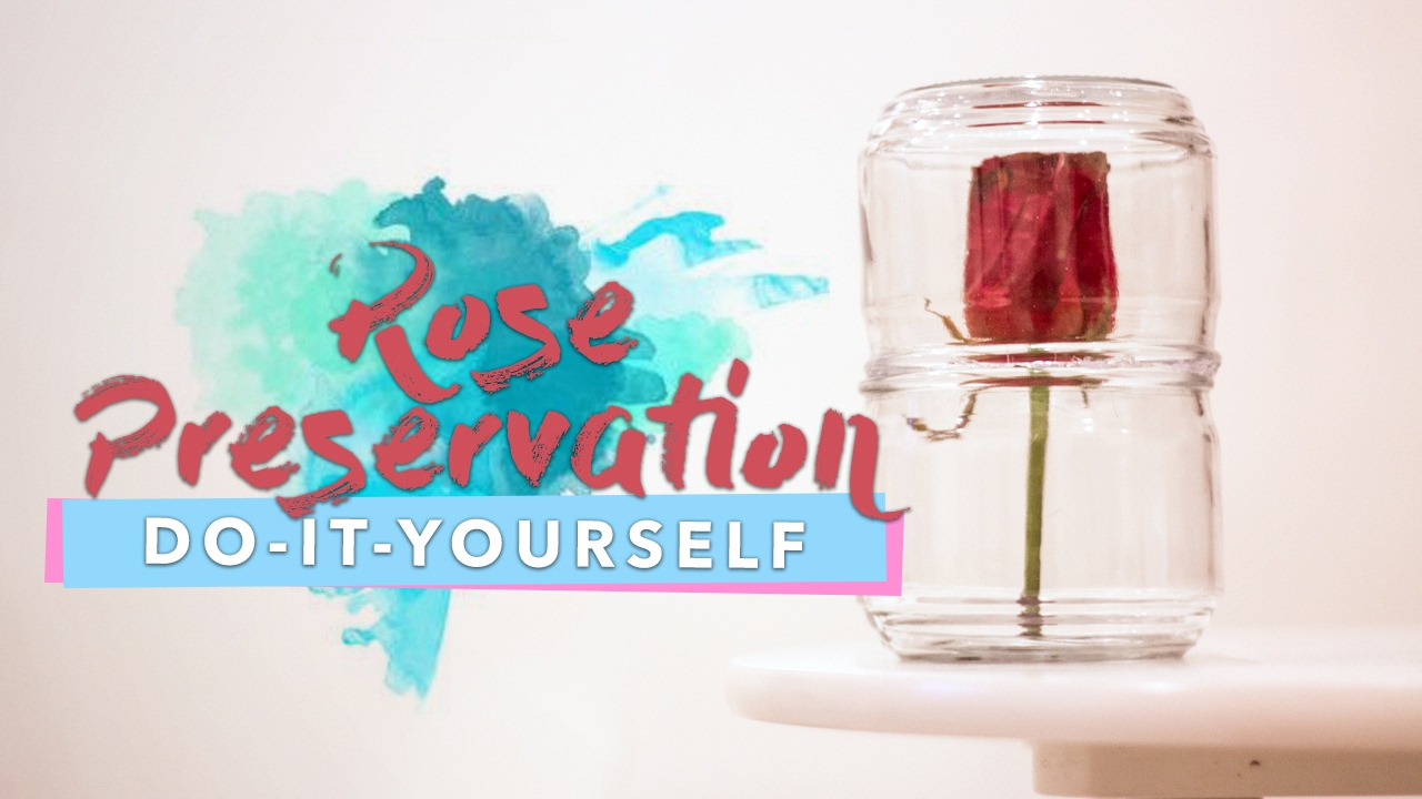 How To Preserve Roses With Wax Steven Wanders Youtube