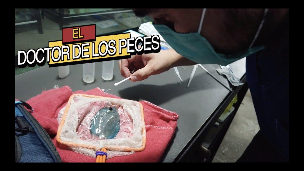 LES PRESENTO AL DOCTOR DE LOS PECES||||||😷🐠🐠🐠