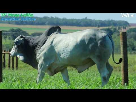 LOTE 54 - REMP 517 - 17º Mega Leilão Genética Aditiva 2020