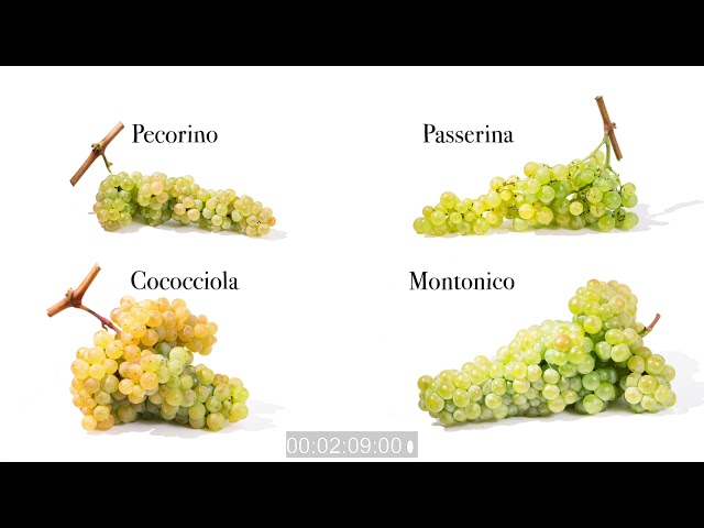 Wines of Abruzzo: the history, the characteristics of the territory and Doc
