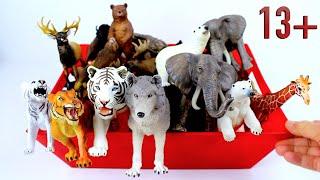 Big Cat Week 2021 - International Tiger Day - World Tiger Day - Sumatran Tiger Bengal Tiger 13+