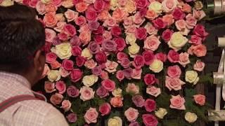 Muro de Rosas / Pared Floral. T3E21 Picando Flores