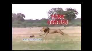 PKK'nın SONU Komik bir FABL (Türk Ordusu VS PKK)