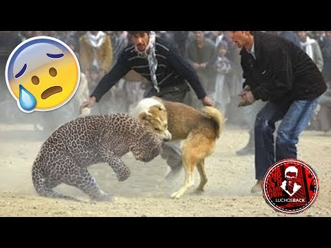 Top 10 Increíbles Peleas Entre Animales Captadas En Vídeo Youtube