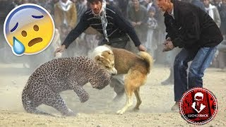 TOP 10 INCREÍBLES PELEAS ENTRE ANIMALES CAPTADAS EN VÍDEO