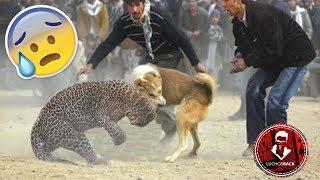 TOP 10 INCREÍBLES PELEAS ENTRE ANIMALES CAPTADAS EN VÍDEO thumbnail
