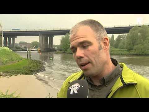 Steur uitgezet in Nieuwe Maas