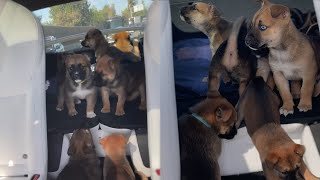 The Puppies Got Escaped While I Was Driving!
