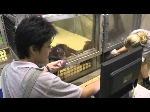 Primate Research with Eye Tracking - Fumihiro&Kano 2010