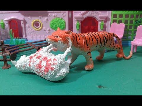 النمر المفترس يأكل خروف العيد / و ملك خائقة جدا !! يوميات ملوكة