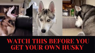 Huskies BEING DRAMATIC for 8 minutes straight