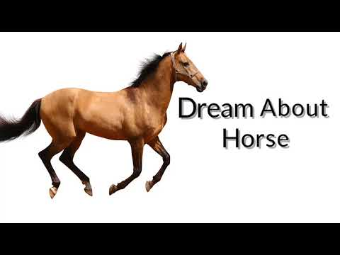 Dreams about horse | Dreams Meaning and Interpretation