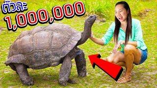 ให้อาหารเต่างอยยักษ์!! ตัวละ 1,000,000 บาท A MILLION TURTLE ALDABRA | พี่เฟิร์น 108Life