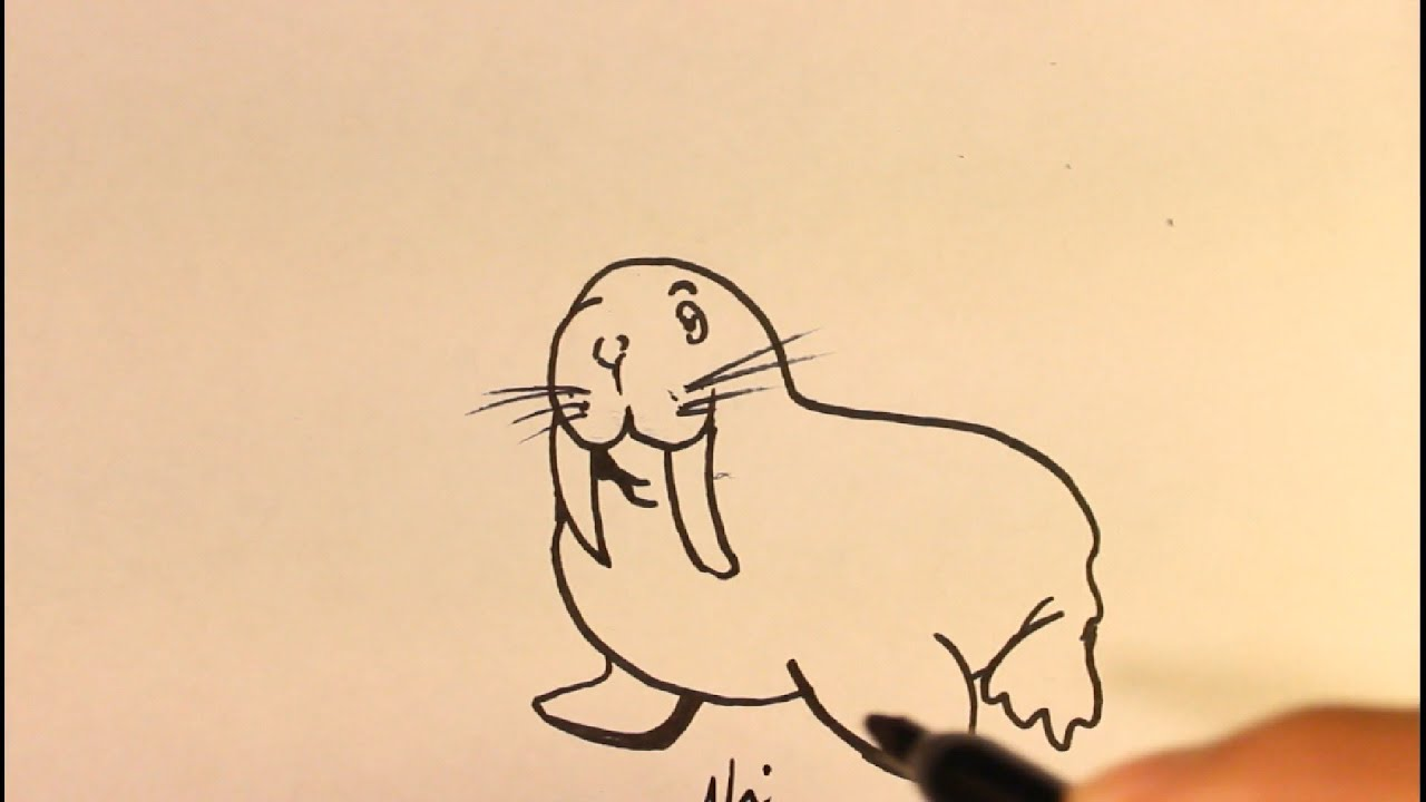 How To Draw Cartoon Walrus