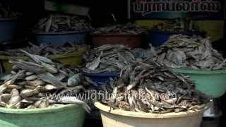 Dried Fish in Madurai market, South India