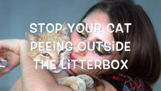 Stop cat peeing everywhere