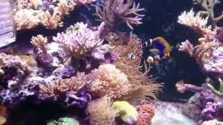 5 8尺缸,海水珊瑚/魚~影片