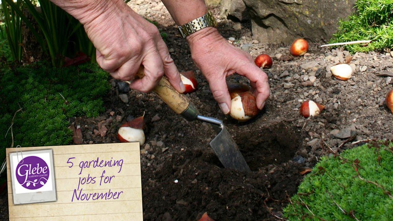 5 Gardening Jobs For November