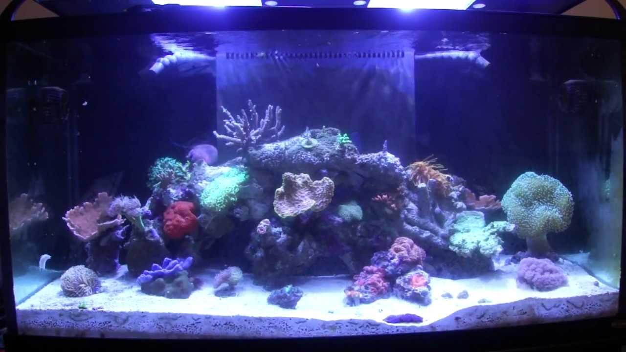 Aquarium Maintenance   How To Reef Aquarium Maintenance Part 1 Introduction Youtube