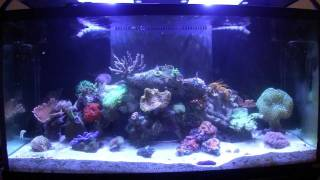 How to Reef Aquarium Maintenance Part 1 - Introduction