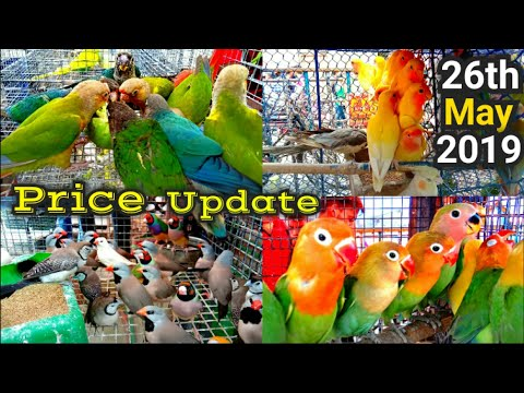 galiff-street-price-update-26th-may-2019-the-cheapest-bird-market-in-asia