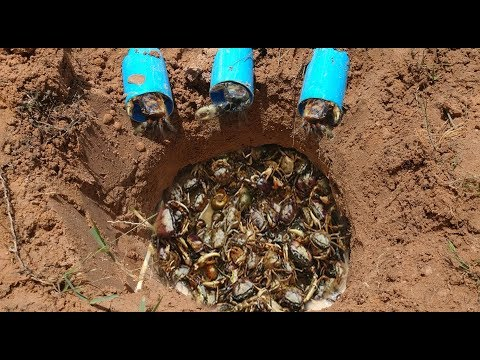Thumbnail: Clever Boys Catch A Lot Of Crab By Using Water Pipe Deep Hole Crab Trap