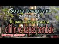 Terapi Burung Stres Suara Burung Cililin Vs Kapas Tembak Jernih Gemericik Air  Mp3 - Mp4 Download