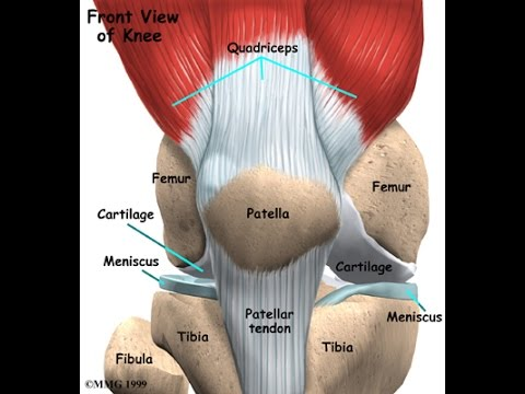 Articulation 1 of 2, Human Anatomy (Undergraduate level)