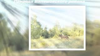 Природа Балашова лето 2020