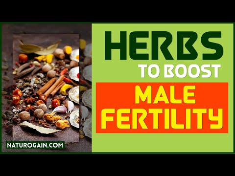 Best Herbs to Increase Sperm Count Boost Male Fertility at Home