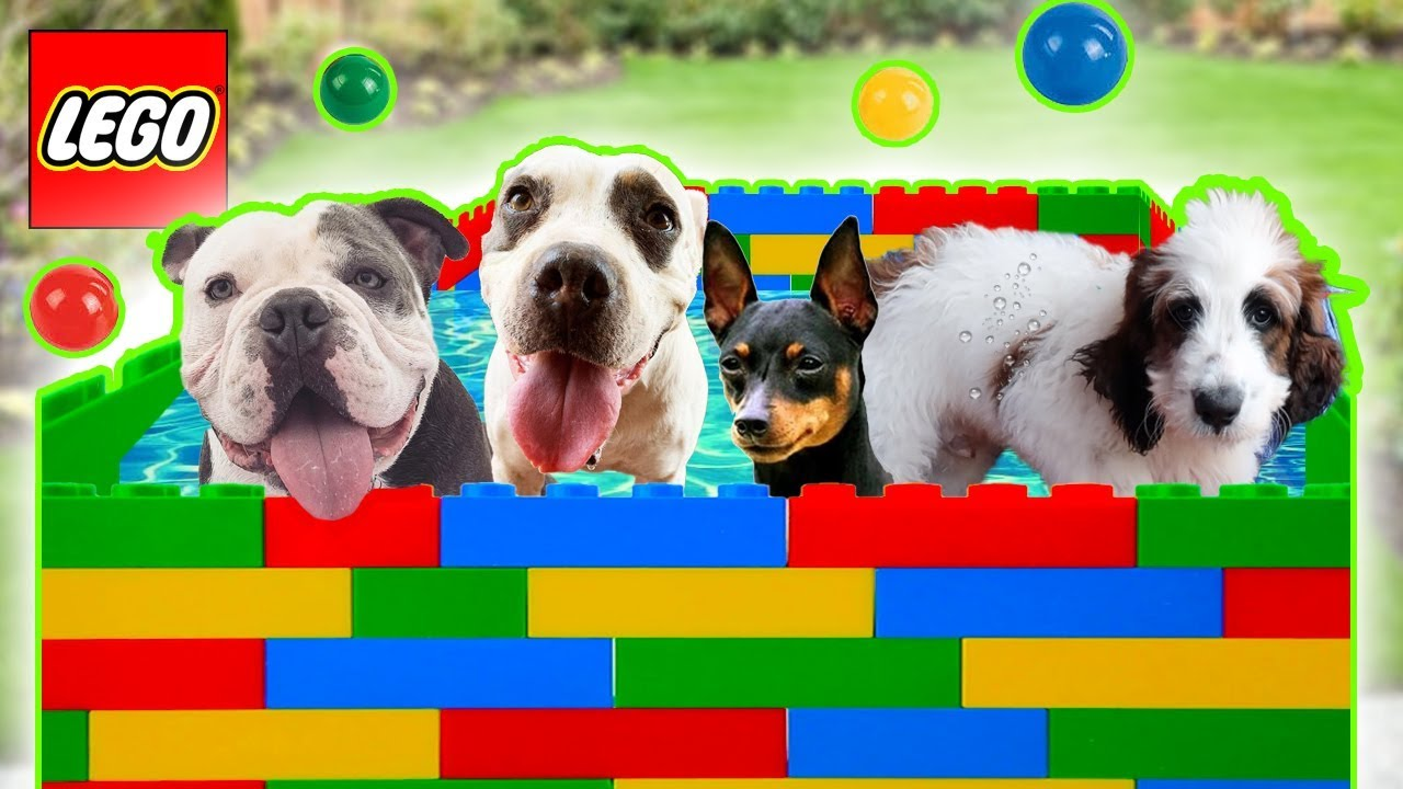 Puppys Play In Lego Pool! Puppy Swims with Balls!