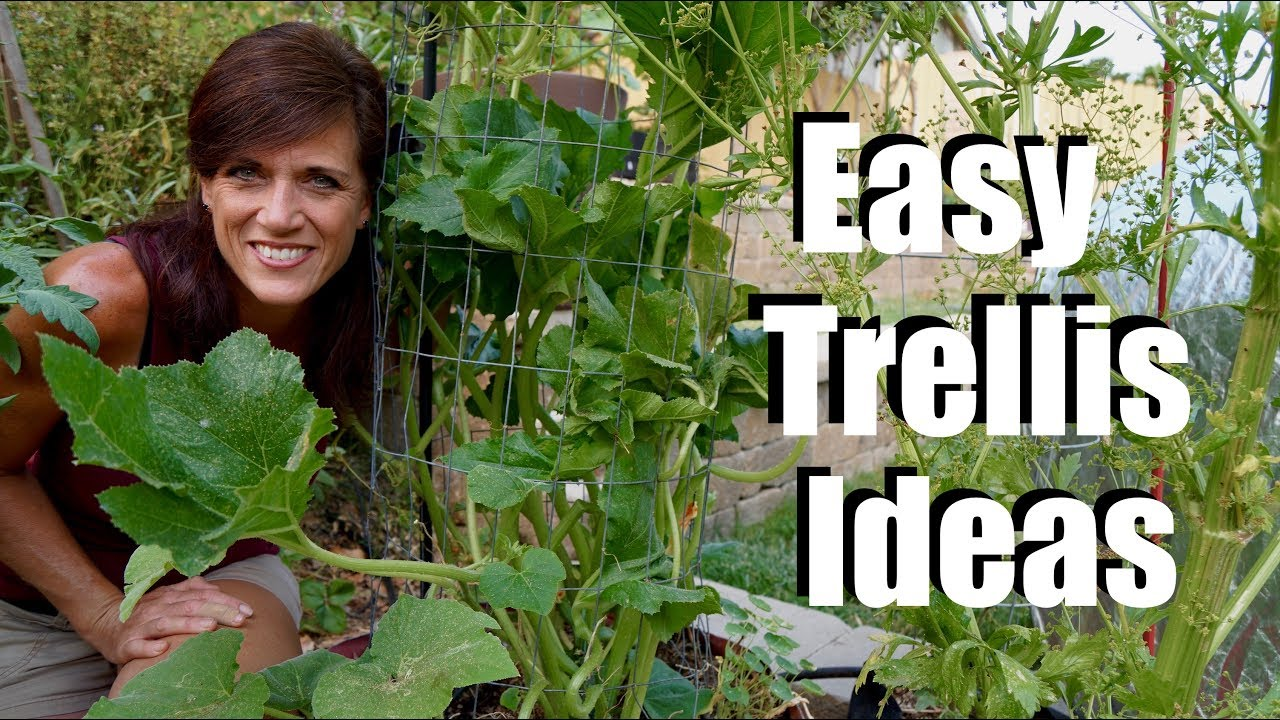 Easy & Inexpensive Trellis Ideas for Vining Plants and Just About ...
