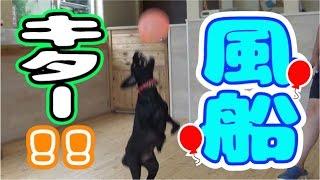 運動神経バツグン!! ワンパ&アースくんの風船ドリブルに注目~~~!...