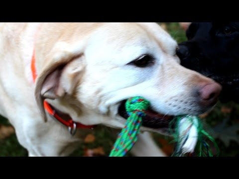 dog-playing-with-a-rope-toy-gardenfork-labs-39