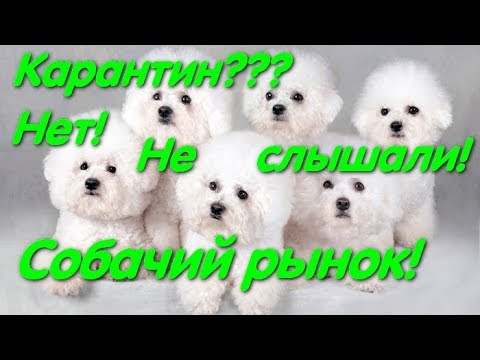 Собачий рынок Одесса. В стране карантин. #dog.  Разные породы собак. Рынок животных.