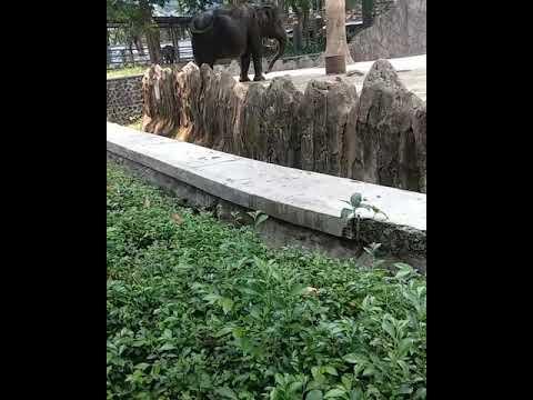 Arshyla Kisah Gajah Dan Raja Abrahah Saat Menyerang Ka Bah Youtube